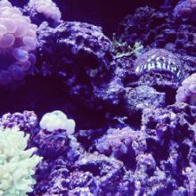 CirPlas Research Page - Coral Image 5 - 250x250